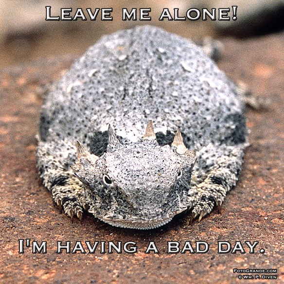 horned-toad-bad-day