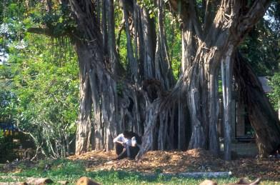 Sri Lanka, Colombo, jardín botanico