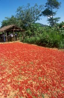 Sri Lanka, Galle, venta de guindillas en la carretera