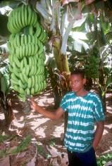 Cabo Verde, Isla Santiago, Pedra Badejo, Plantación plátanos, retrato
