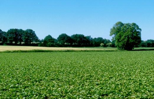 Alemania, Baja Sajonia, Lüneburg, campos de cultivos