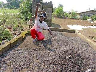 Camerún, Melong, secado del cafe