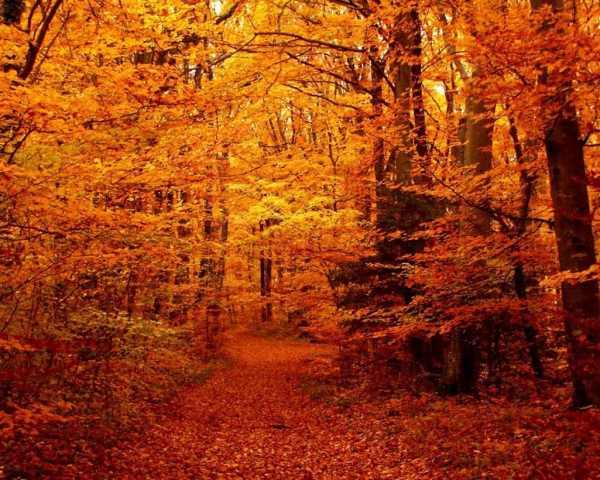 Красивые фото природы. Золотая осень. (15 фото) | ФотоИнтерес