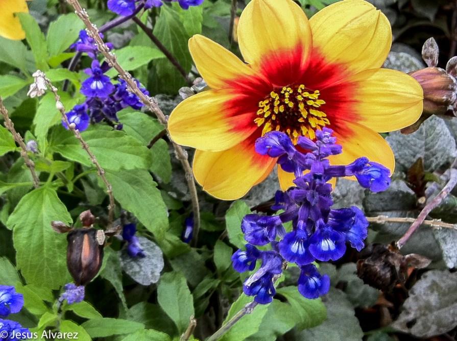 pau flores-1