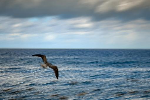 Foto: Peter Wigen