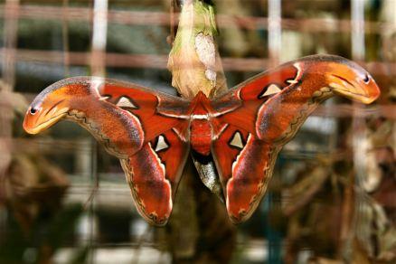 Cameron Highland Butterfly Farm