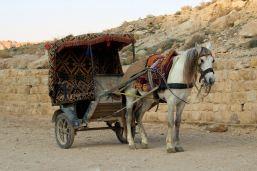 Petra - konie