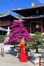 Chi Lin Nunnery - Ogród Lotosu