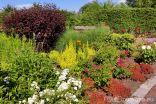 Ogród z Różą
