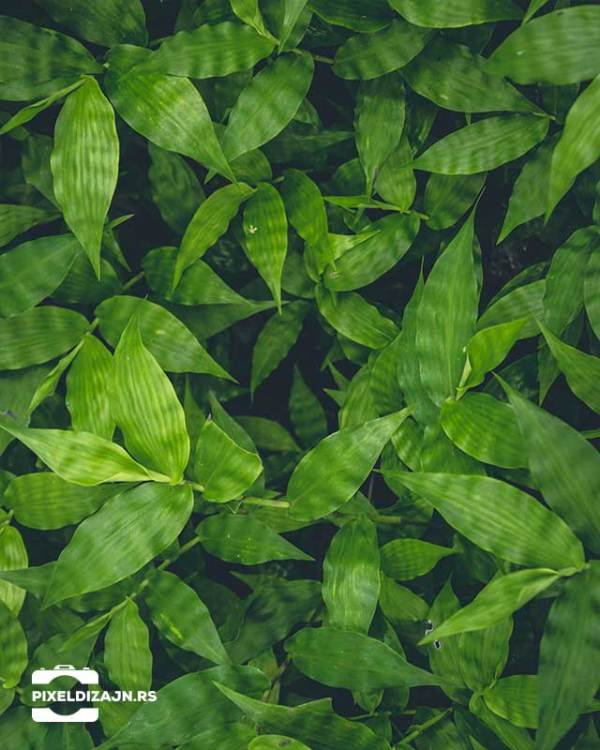 Biljke_listovi_foto_pozadine_pixel_web
