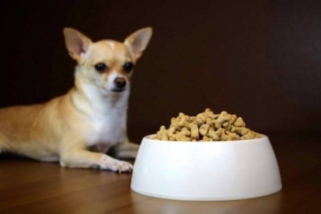 Alimentos secos tem menos chances de se acumularem na gengiva do animal. (Foto: Reprodução/wagwalking)