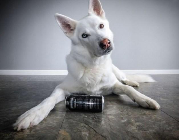 Warnick é um cão muito inteligente e que aprende fácil novos comandos. (Foto: Arquivo Pessoal/Kennedy News and Media)