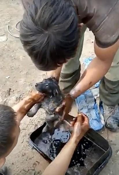 Os irmãos lavaram o filhote com diesel para remover o alcatrão.
