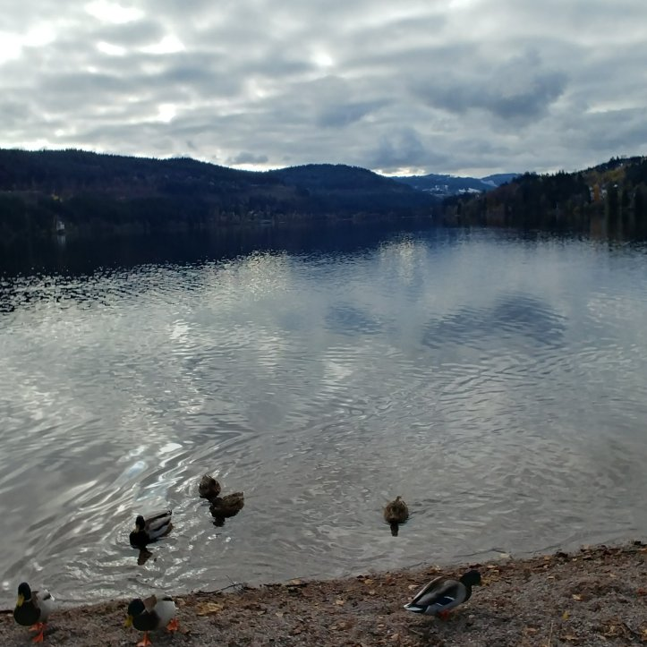 Beautiful titisee in november lake