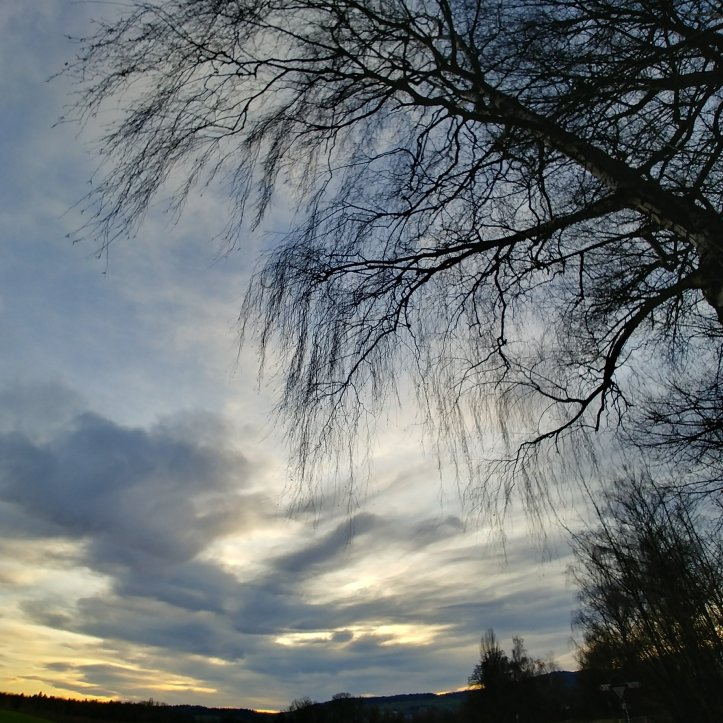 Clouds and bare branches looking like waving arms in the sunset sky