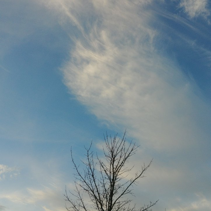 Blue sky, a winter tree and lovely clouds