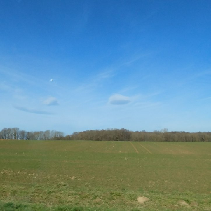 Spring landscape: growing green grass and blue sky
