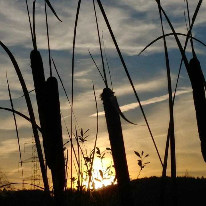 Plant silouettes and gorgeous sunset, naturephotography by fotosbykarin