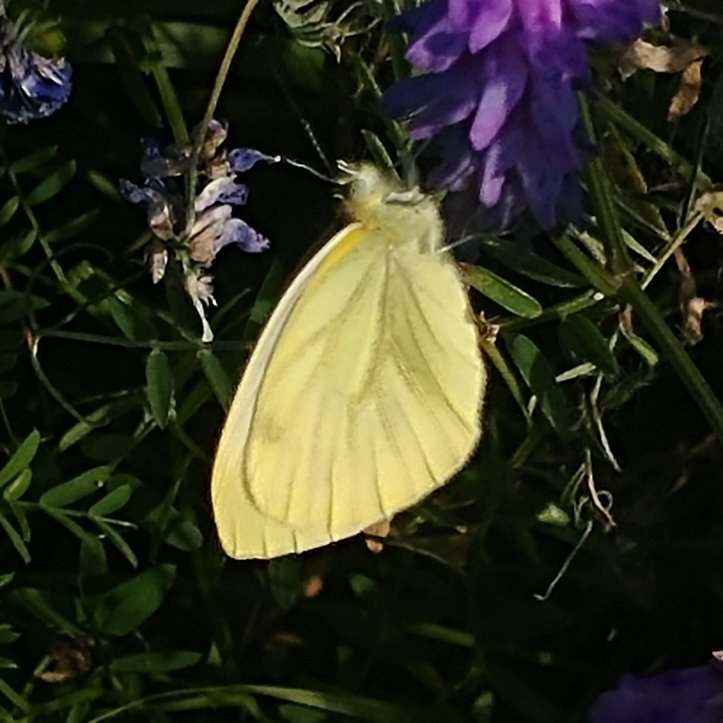 Pretty yellow butterfly, nature photography by fotosbykarin