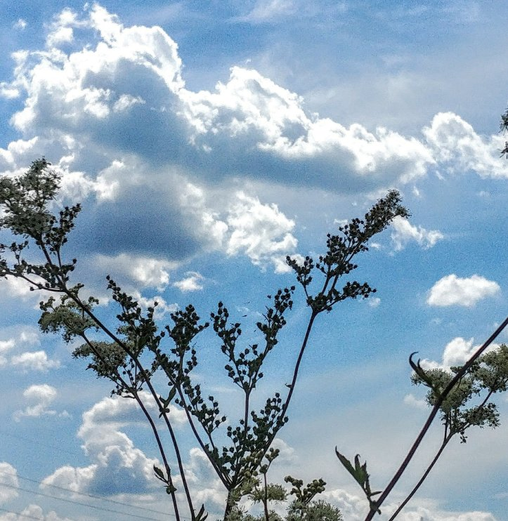 Lovely flouers touching the clouds, nature photo by fotosbykarin