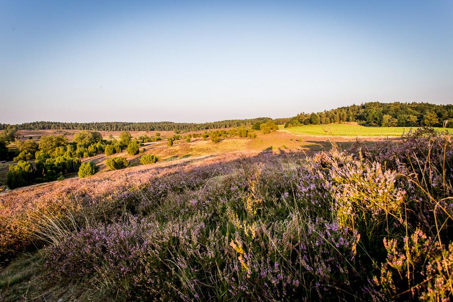 Landschaftsfotografie am Wilseder Berg