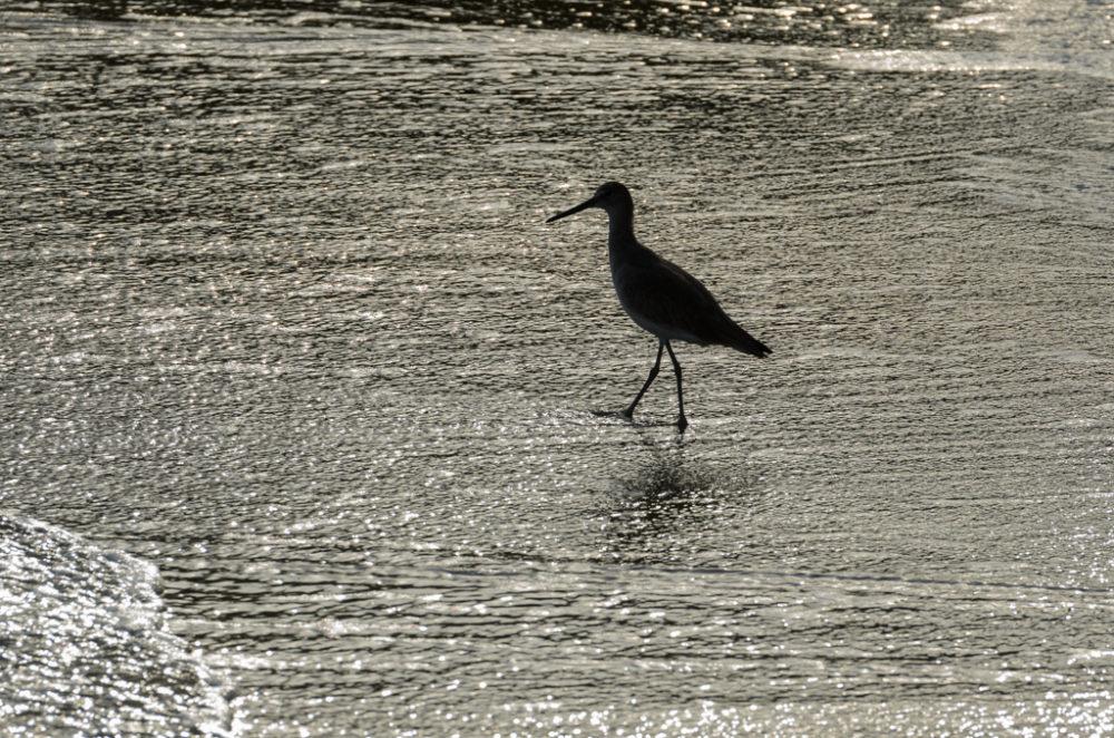 Silueta de ave en el mar