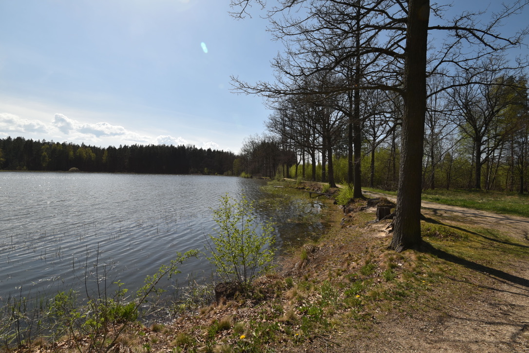 Teich im Waldviertel
