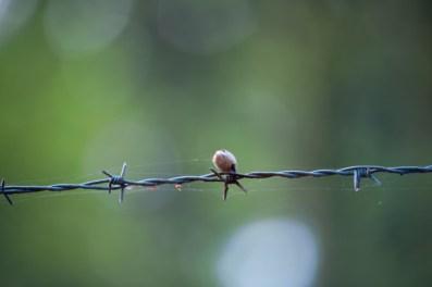 Zäune und viel Stacheldraht sichert die Tiere im Tierpark Dünnwald.