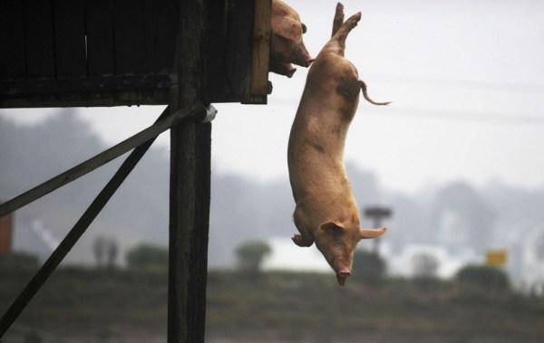 ФотоТелеграф 187 Животные из выпусков новостей