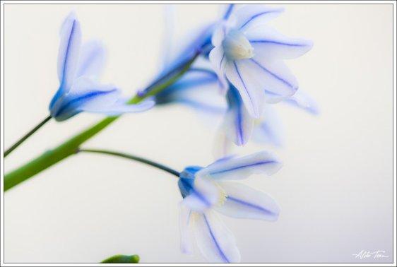 Äi liiguda lillegid