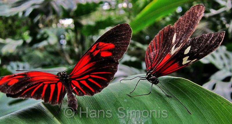 Mooie vlinders bij Vlinders aan de Vliet