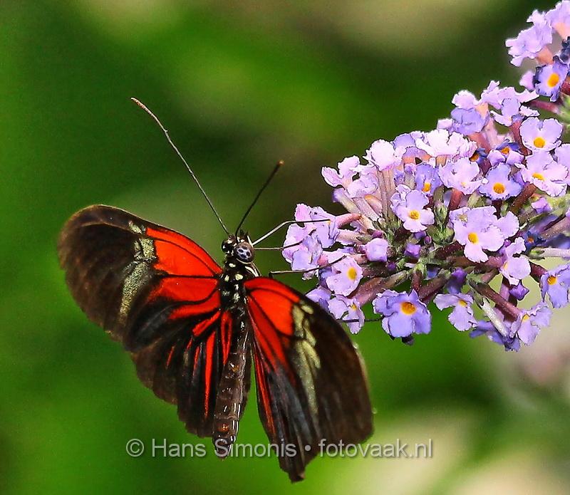 00000052_vlindersaandevliet_irisch