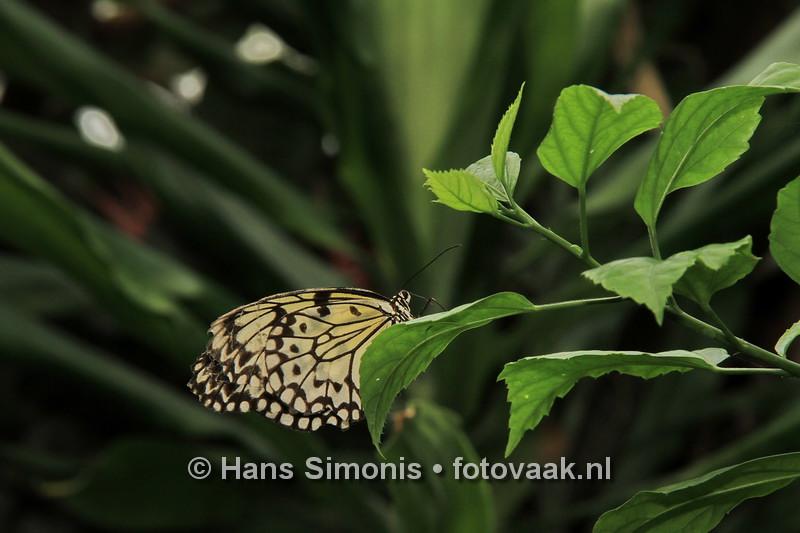 160626_004_Vlinders_aan_de_Vliet