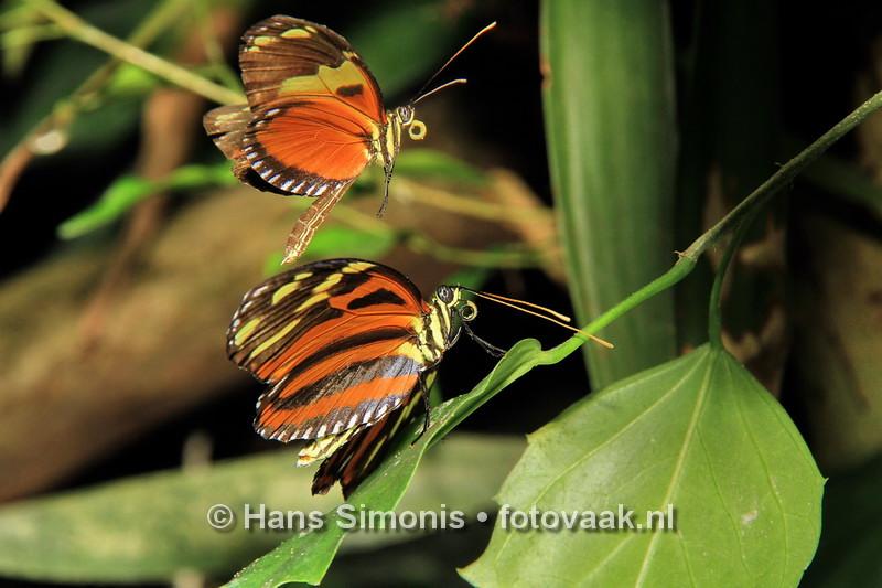 160626_005_Vlinders_aan_de_Vliet