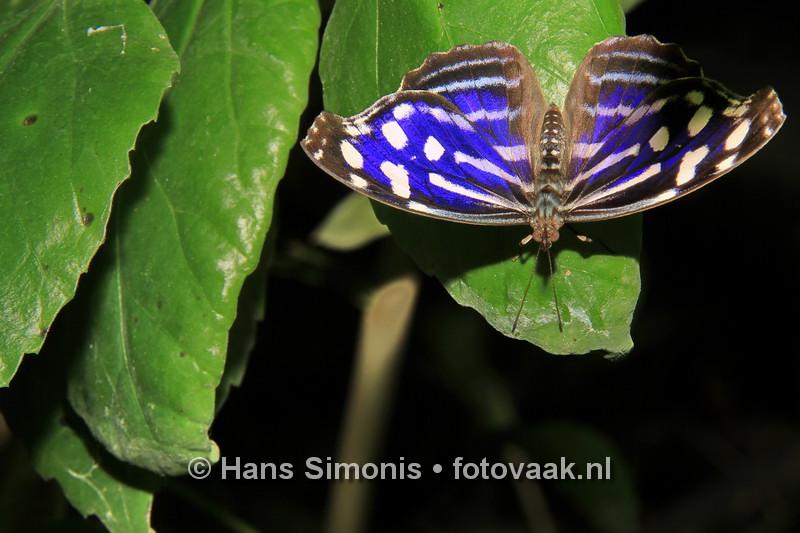 160626_006_Vlinders_aan_de_Vliet