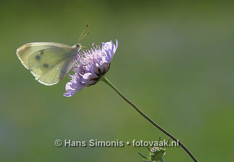 160830002_bij_vlinders-aan_de-vliet