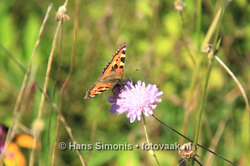 160830005_bij_vlinders-aan_de-vliet