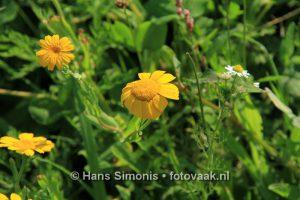 160830006_bij_vlinders-aan_de-vliet