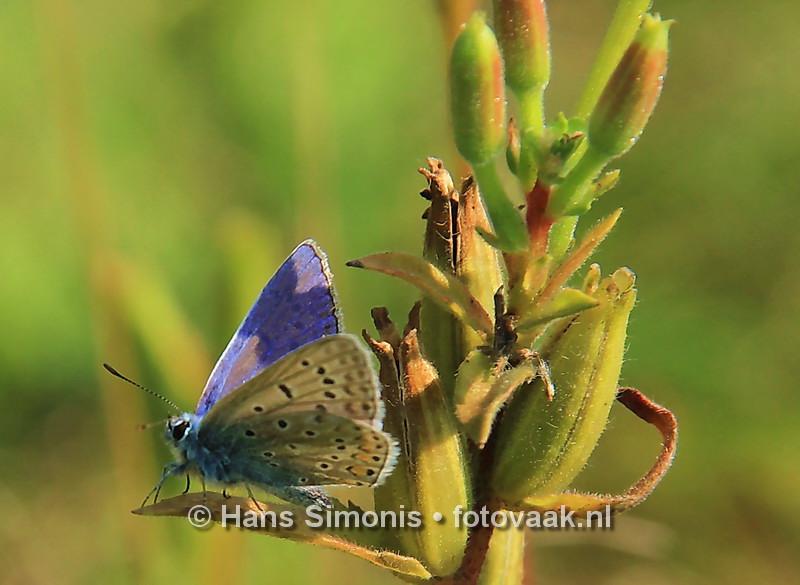 160830008_bij_vlinders-aan_de-vliet