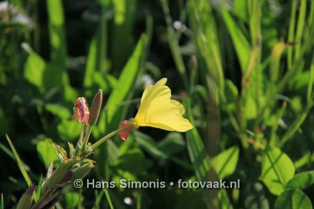 160830010_bij_vlinders-aan_de-vliet