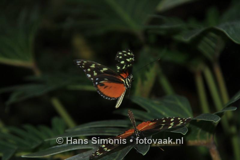 16093016vlinders_aan_de_vliet