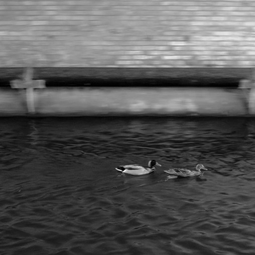 Using panning on a pair of swimming ducks