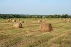 Убранное поле