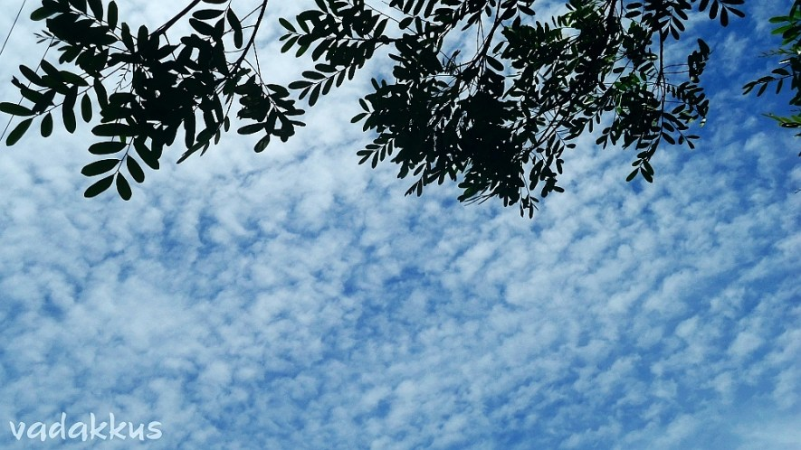 Wispy White Clouds in a Sky-Blue Sky!