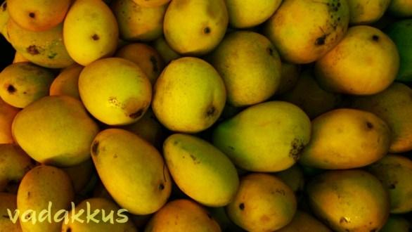 Ripe Banganapalli Mangoes!