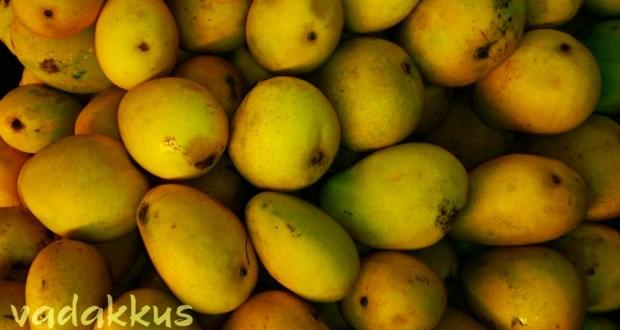 Yummy Ripe Banganapalli Mangoes kept on display