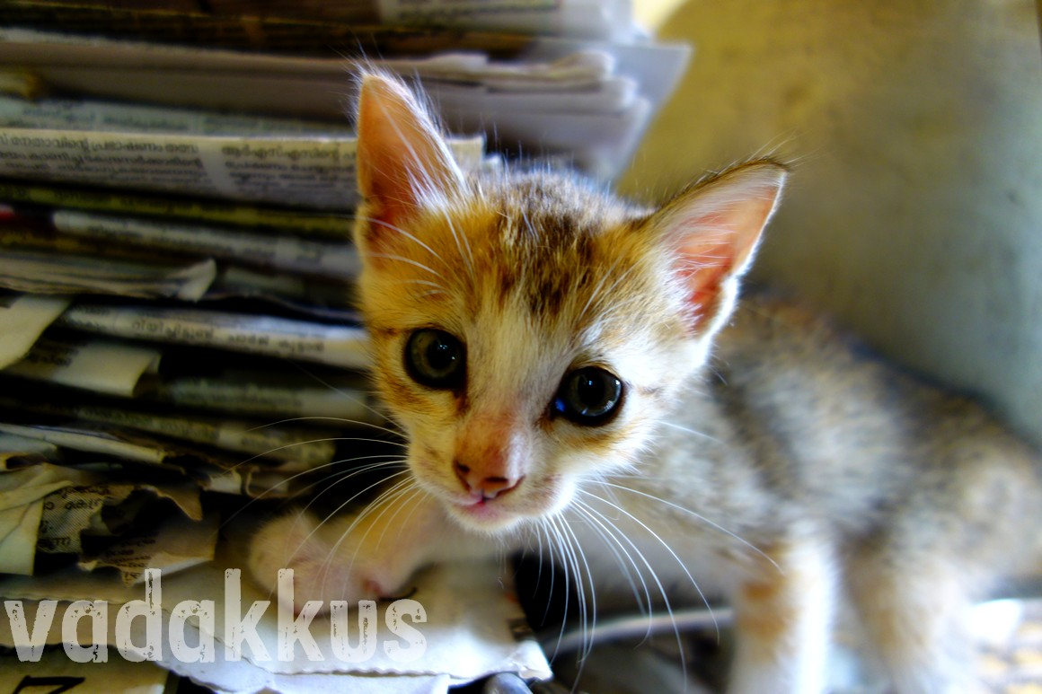 A photo of a kitten