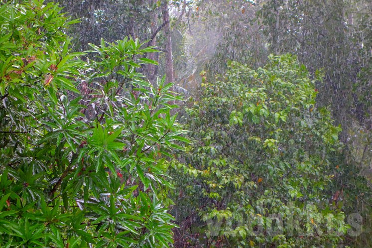 A Photograph of Rain. That Looks Like a Painting.