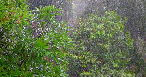 Photograph of falling rain among trees taken in HDR