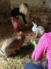 Fütterung der Hasen-Mamas